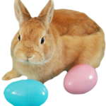 bunny-png-tumblr-clipart-03t9Si
